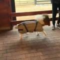 Happy mini pony